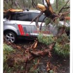 sydney storm fallen tree pcg building certifier car